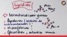 Lipídios - Video